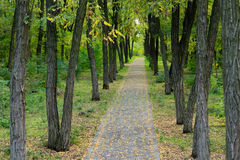 Path through beautiful woodland Royalty Free Stock Images