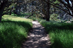 Path Of Beauty. Pathway to beach, Pt Lobos, Calif stock photo