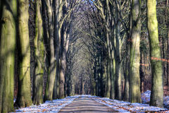 Path with beeches Stock Photo