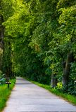 Path below the linden trees. Lovely summer scenery of the longest linden alley in Europe Royalty Free Stock Photo