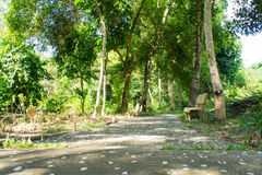 Path and bench in a beautiful tropical park Royalty Free Stock Photography
