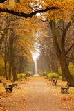 Path with benches in park. Path with benches along trees covered in golden leafs in park Stock Photography