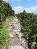 Path with big stones in mountains. Nice path with big stones and green pine trees Royalty Free Stock Image