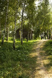 Path among birch trees. To the little wooden house royalty free stock image