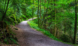 Path in the Black wood in Triberg, Germany. Path in the Black wood in Triberg, Baden Germany Stock Photos