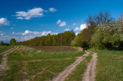 Path in blooming spring fores. T in Poland Royalty Free Stock Images