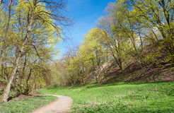 Path in blooming spring forest Stock Images