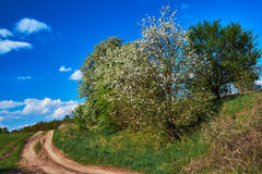 Path in blooming spring forest Royalty Free Stock Photo