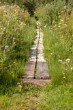 Path with boards in swamp. In a spring warm day Stock Images