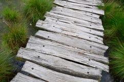 Path through bog. A plank path going through a bog stock photography