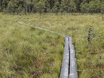 Path through bog. Footpath through a bog in the Alam-Pedja Nature reserve, Estonia Stock Photography