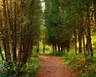 Path in botanical garden park with trees Stock Image