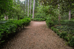 Path  in a botanical garden Stock Image