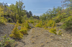 The path at the bottom of the ravine. Stock Photo