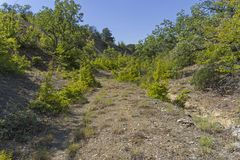 The path at the bottom of the ravine. Forest in the Crimean mountains. A sunny day in early September Royalty Free Stock Image