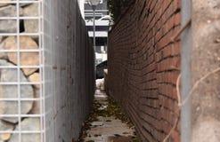 Path between the brick walls Royalty Free Stock Photo