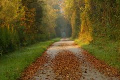 Path with bright colored foliage Royalty Free Stock Images