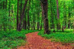 Path in the bright green forest. Dry leaves stock photography
