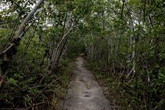 Path with Broken Trees royalty free stock photography