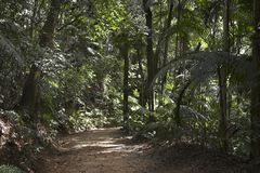 Path in Burle Marx Park royalty free stock photos