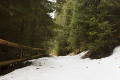 Path in Carpathian mountains forest Stock Photos