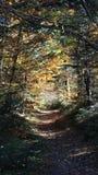 Path in Carpathian mountains stock image