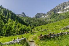 Path in Carphatian Mountains leading to summit. Close view. Royalty Free Stock Photo