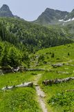 Path in Carphatian Mountains passing through the log tree leading to summit Royalty Free Stock Photography