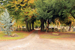 Path through cemetery under a canopy of trees. Path through cemetery under canopy of trees in England Royalty Free Stock Photography