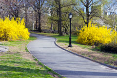 Path Through Central Park in New York stock photography