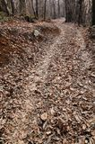 Path in a chestnut wood in late winter Royalty Free Stock Photography