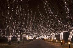 Path with christmas lights royalty free stock image