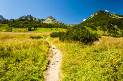 Path by clearing Stock Photos