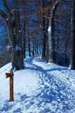 Path climbs uphill in winter forest. The path climbs uphill in the winter forest Stock Photo