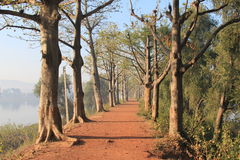 A path close to a lake in morning mist Royalty Free Stock Photography