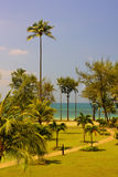 Path through of coconut palms leading to beach. Island Bintan. Stock Photography