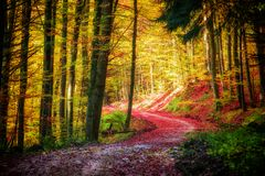 Path in the colorful autumn forest. Seasonal, peaceful concept Stock Photos