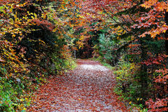 Hiking trail in colorful fall forest scenery. A trail in a mixed forest by vibrant colors at fall - in Mittenwald, Germany Stock Image