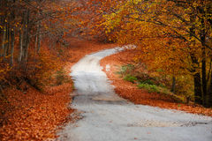 Path through a colorful forest Royalty Free Stock Image