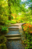 Path through a colorful garden at the National Arboretum in Wash Royalty Free Stock Photography