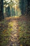 Path with colorful trees, sun is shining trough it in the autumn royalty free stock photo