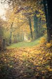 Path with colorful trees, sun is shining trough it in the autumn stock photo