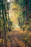 Path with colorful trees, sun is shining trough it in the autumn royalty free stock images