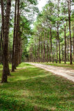 Path in coniferous Royalty Free Stock Photography