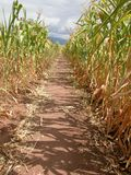 Path in the corn Royalty Free Stock Images