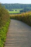 Path Through Corn Field Royalty Free Stock Images
