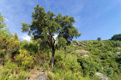 Path in Corsica mountains Royalty Free Stock Photography