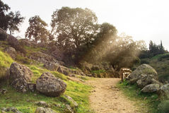 A path at a countryside, evening at surroundings of Toledo Royalty Free Stock Photos