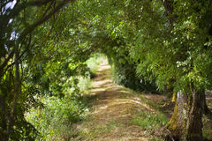 Path in the countryside Royalty Free Stock Photos