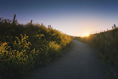 Path in the countryside at sunset Stock Photos